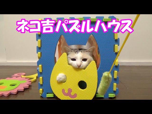 猫のおもしろパズルハウス Funny puzzle cat house