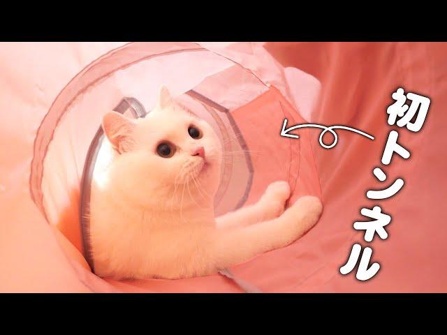 猫生初のトンネルを見た時のポムさんの反応は…?