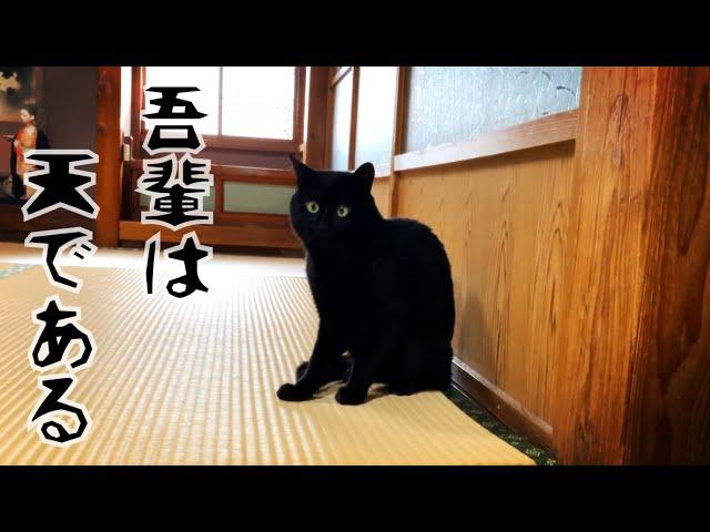 猫だった頃を思い出しかけている猫 Ten gets his cat skills back