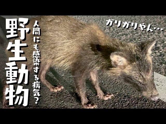 生物探索をしていたら弱りきった野生動物と遭遇!?