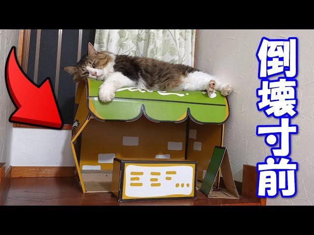 猫カフェが倒壊寸前です‥(゚Д゚;)