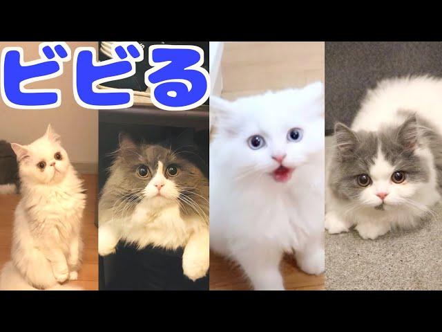 台風が直撃した時の猫たちの反応が様々で面白い!笑