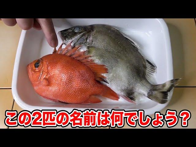 入手した珍魚で「セビーチェ」という謎の料理を作ってみたら美味しかったです!!!
