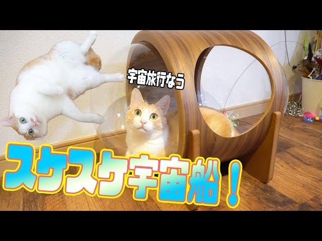 宇宙船型の猫ハウスがスケスケでオシャレで可愛くてスケスケ!