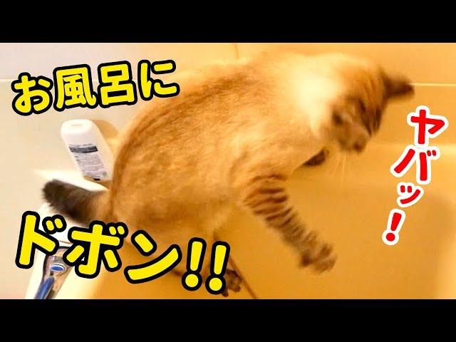 【悲報】猫がお風呂に落ちました