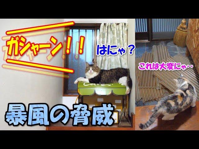 台風通過中にさすがのボス猫も驚いたその瞬間!!