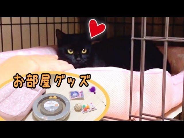 保護した黒猫のお部屋を豪華にしてみました