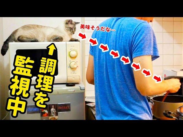 飼い主の料理をしつこく監視する猫が、料理完成後に取った行動とは…
