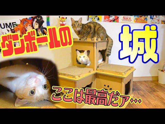 ダンボールで猫の家を作ったら猫たちがはしゃぎはじめたwwww